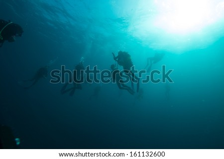 Group of divers doing safety stop with sunlight in the background