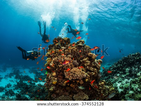 Group of divers hanging around vivid coral reef formation. Red Sea, Egypt - stock photo