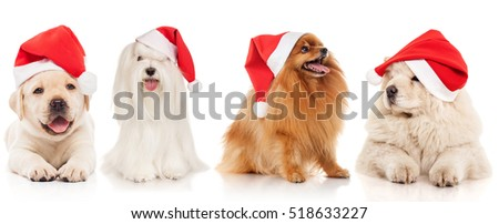 Group of dog breeds in santa hat, isolated on white