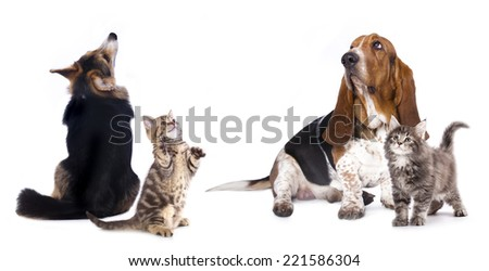 group of dog  kitten  and standing on hind legs, kitten looking up - stock photo