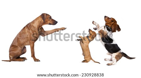 group of dog standing  - stock photo