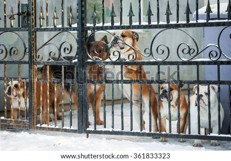 Group of dogs behind a fence