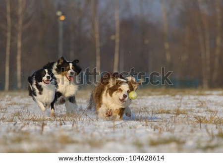 group of dogs chases tennis ball in the snow - stock photo