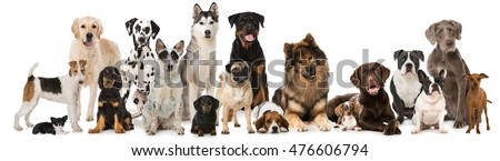 Group of dogs isolated on white