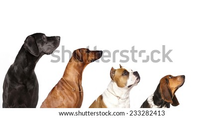 group of dogs  looking up