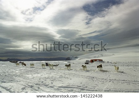 Group of dogs near trailer in snow-covered landscape - stock photo