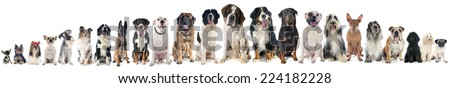 group of dogs of white background - stock photo