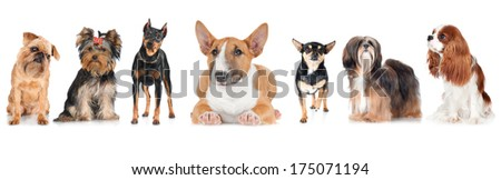 group of dogs on white - stock photo