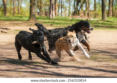 Group of dogs playing in the park - stock photo