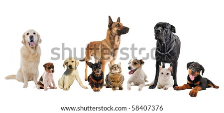 group of dogs, puppies and cats on a white background