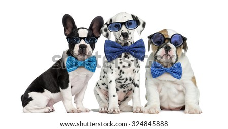 Group of dogs wearing glasses and bow ties - stock photo