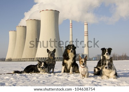 group of dogs, which faces the plant chimneys - stock photo