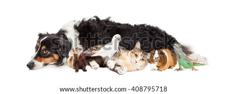 Group of domestic pets together over white background
