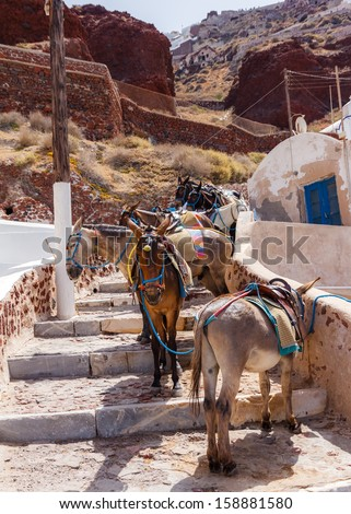 Group of donkeys parked along the step road from Ammoudi to Oia in Greece - stock photo
