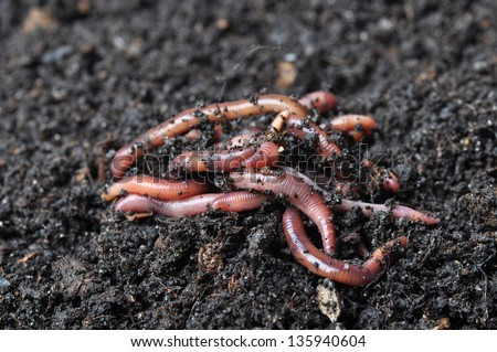 Group of earthworms. - stock photo