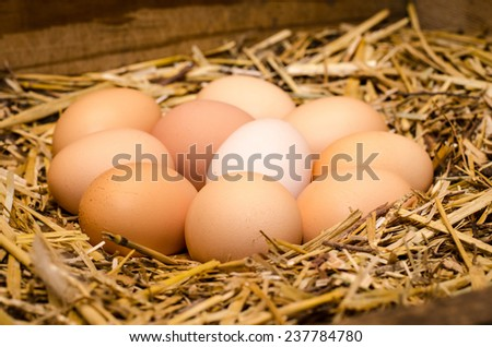 group of eggs on straw in a nesting-box - stock photo