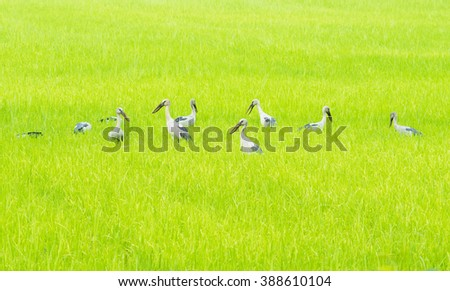 Group of egret an heron in green field