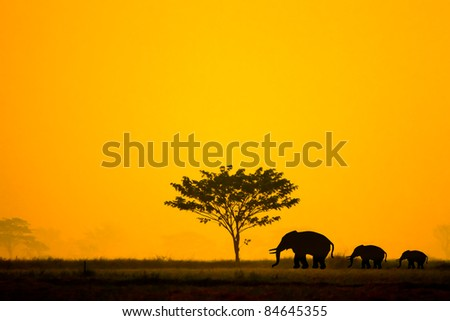Group of elephant in thailand - stock photo