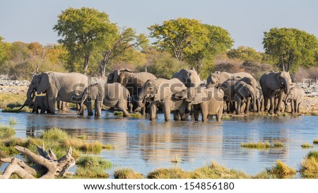 Group of Elephants drink at a waterhole in Etosha - stock photo
