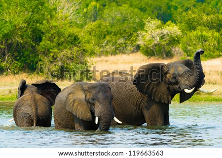 Group of elephants takes shower in the water