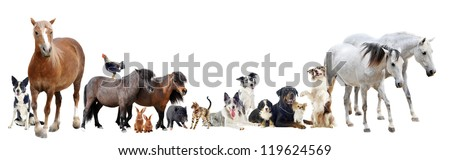 group of farm animals and pets in front of white background