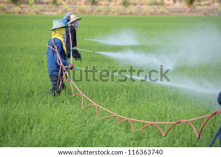 group of farmer spraying pesticide in paddy field. - stock photo
