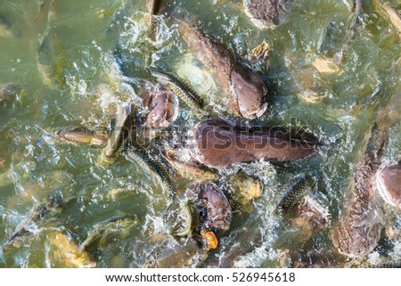 Group of fish in lake, Thailand