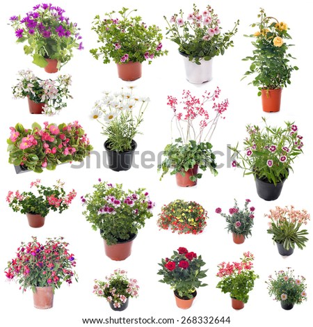 group of flower plants in front of white background - stock photo