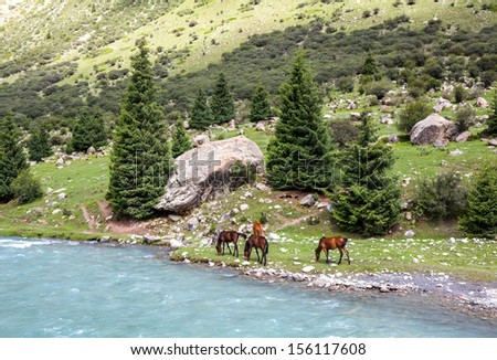 Group of four horses grazing at blue mountain river - stock photo