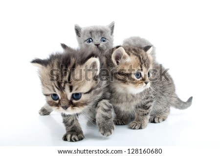 group of four kittens walking together - stock photo