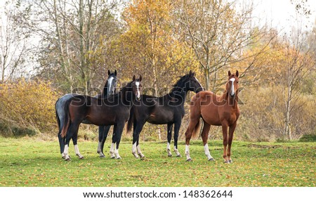Group of four young horses standing on pasture in autumn - stock photo