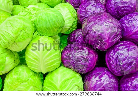 Group of fresh organically grown green and red cabbage in the farmer market at Puyallup, Washington, USA - stock photo
