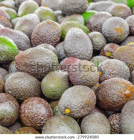 Group of fresh organically grown mini avocados in the farmer market at Puyallup, Washington, USA. A close up full l frame of avocados. - stock photo