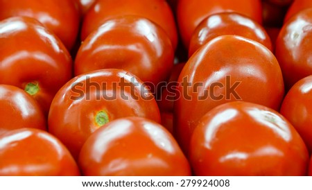 Group of fresh organically grown tomatoes  in the farmer market at Puyallup, Washington, USA. A close up full l frame of tomatoes .