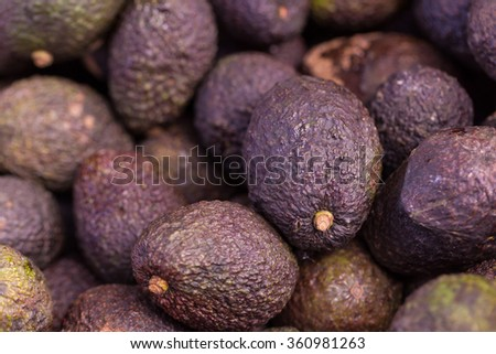 Group of fresh ripe and unripe avocados in the farmer.