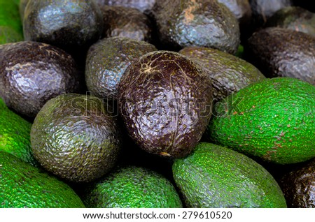 Group of fresh ripe and unripe avocados in the farmer market at Puyallup, Washington, USA. A close up full frame of fresh avocados. - stock photo