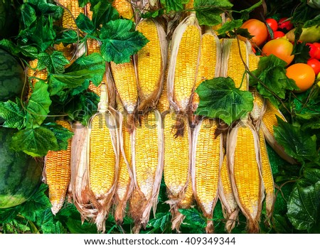 Group of Fresh Sweet Corn on Cobs in The Farm for Sale used as Template - stock photo