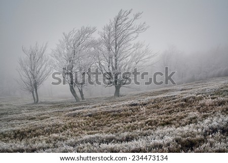 Group of frosted trees in the mountains - stock photo