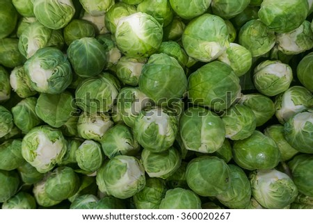 group of green cabbages in supermarket background. fresh and raw food ingredient in close up detail view