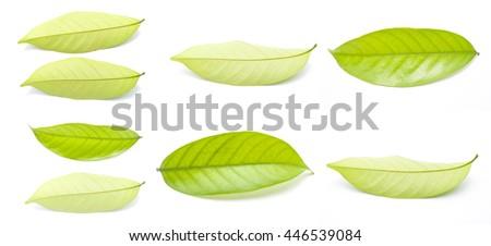 Group of Green leaves Isolated on white background - stock photo