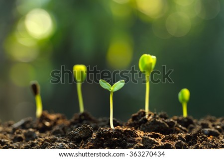 Group of green sprouts growing out from soil