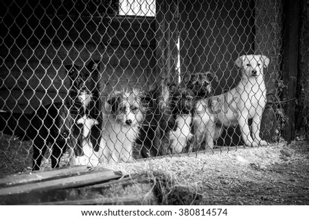 Group of homeless dogs in a dog shelter behind the fence  - stock photo