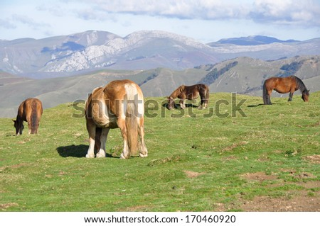 Group of horses grazing at green pasture, Pyrenees - stock photo