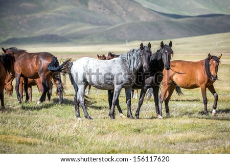 Group of horses on pasturage looking at camera - stock photo