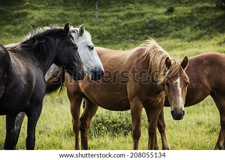 Group of horses on pasture - stock photo