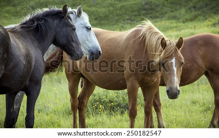 Group of horses on pasture