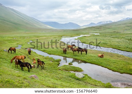 Group of horses on summer pasturage in mountains - stock photo