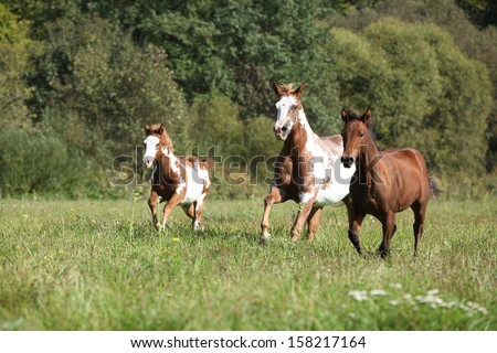 Group of horses running in freedom together - stock photo