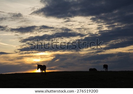 Group of horses silhouettes at sunset in the Subasio mountain, Umbria - Italy. - stock photo