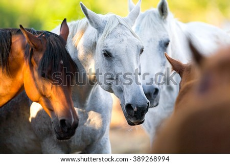 Group of horses standing together outdoor - stock photo